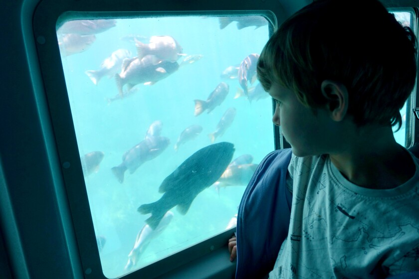 A boy aboard the Sea Wolf Semi-Submersible looks out a window at fish.