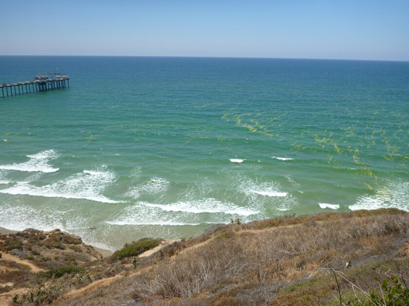 A mysterious green foam visited San Diego beaches last month. Photos by Danielle Williams