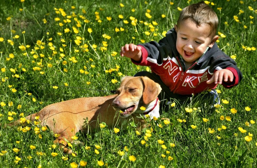 """Dog bite prevention begins with the understanding that dogs do not bite """"out of the blue.""""  Associated Press photo"""