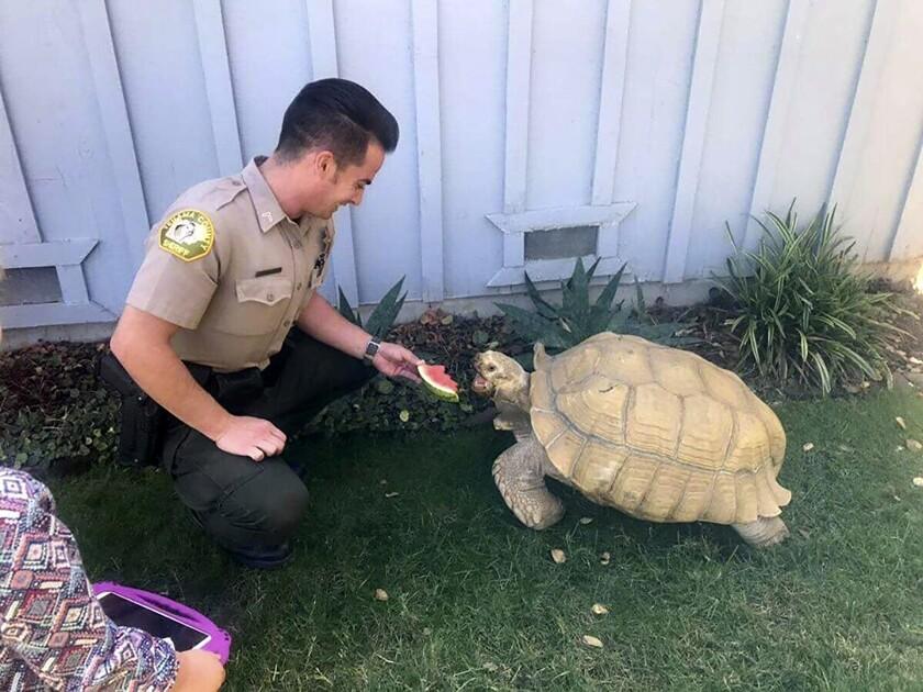 Tortoise Trek