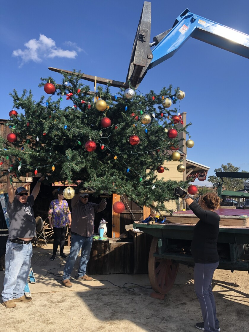 Ramona Chamber of Commerce members and volunteers erect the town Christmas Tree ready for the Lighting of the Tree ceremony on Dec. 7.