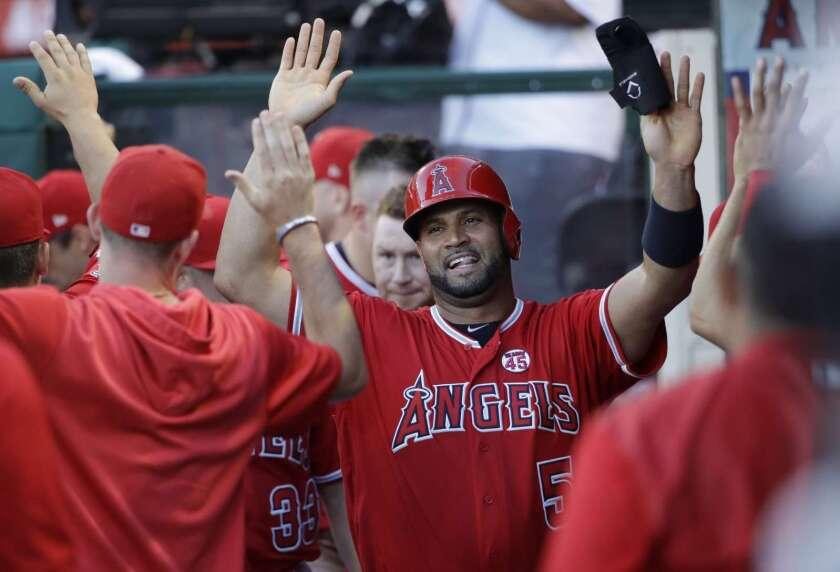 Albert Pujols (c) recibe la felicitación de sus compañeros en la banca tras anotar, en la reciente victoria de los Angels en Anaheim, California.