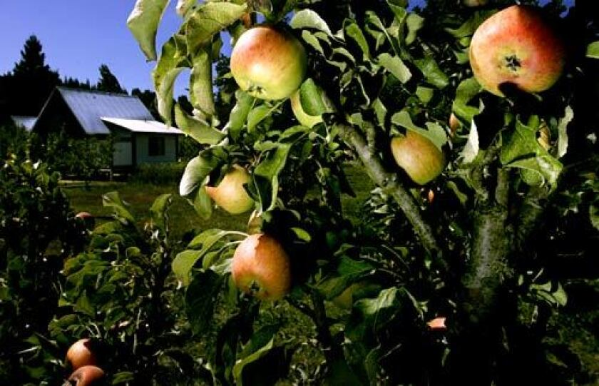 The Apple Farm in Philo, 120 miles northwest of San Francisco in the Anderson Valley wine country.