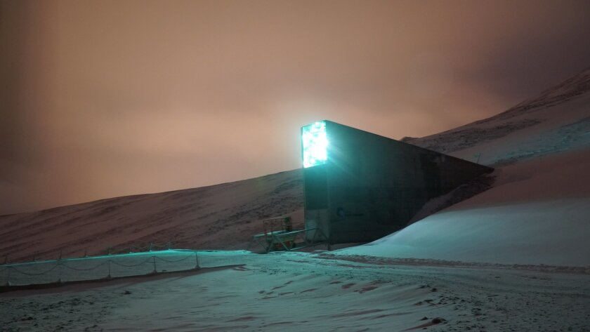 Syrian Seeds Withdrawn From Arctic Doomsday Vault The San