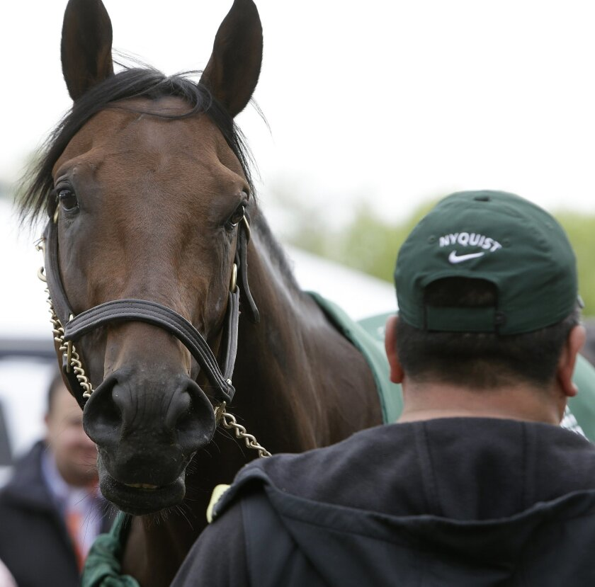 """FILE - In this May 19, 2016, file photo, Nyquist is attended to by hot walker Fernel """"Lefty"""" Serrano after a workout for the Preakness Stakes in Baltimore. A few days after Kentucky Derby winner Nyquist was declared out of the Belmont Stakes due to a fever, Red Wings forward Gustav Nyquist was not"""