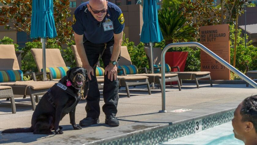 John Tipton of Vista and his service dog Daisy visit with swimmers in the pool at Pechanga Resort & Casino in Temecula. The 22-year Marine Corps veteran and his dog are the first of 10 human-canine security times the casino plans to hire.