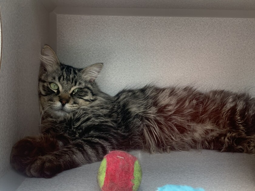 Pet of the week is called 'Fish Sticks.'
