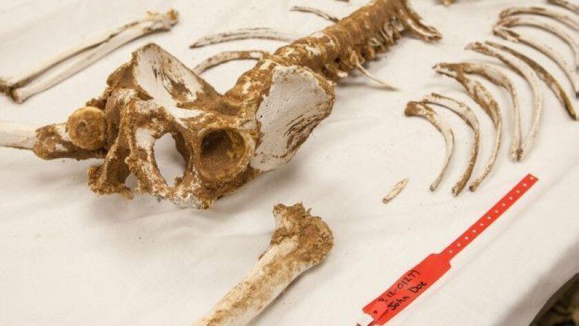 Los investigadores estudiaron lo que ocurre con el cuerpo humano en el desierto.