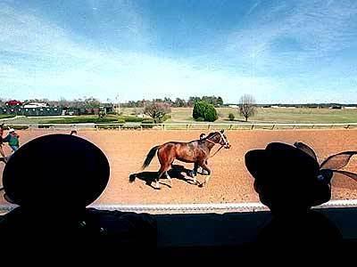 Oaklawn Park racetrack