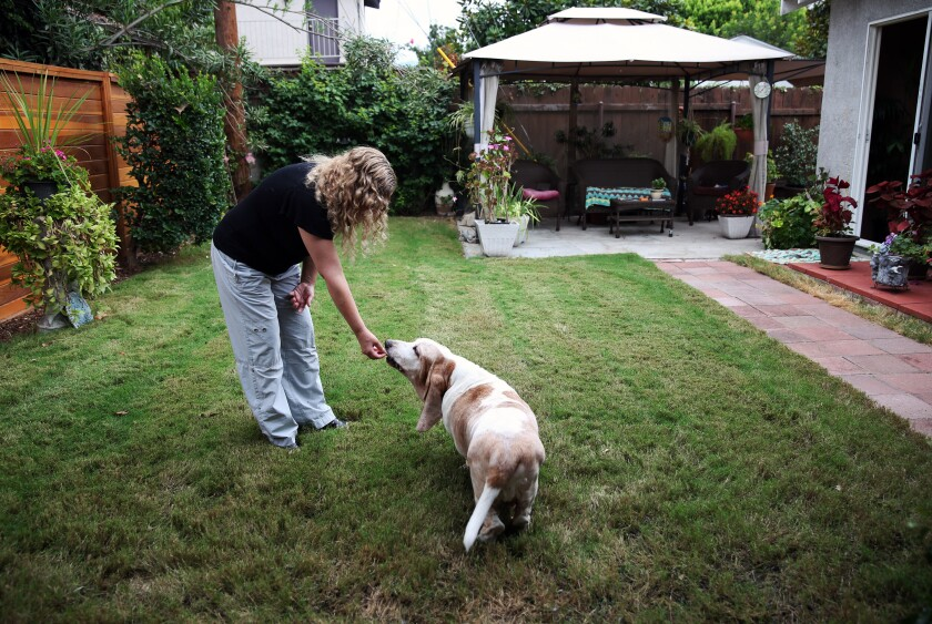 Andrea Cullipher has turned to CBD oil to treat her basset hound, Axel, for his arthritis.