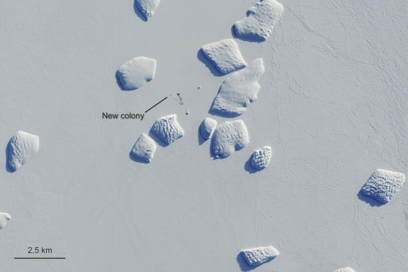 Las marcas apuntan a una mancha de guano de pingüino en una imagen capturada por el satélite europeo Sentinel-2 el 26 de agosto del 2019. Científicos británicos dicen que existen más colonias de pingüinos emperadores en la Antártida de lo que se pensaba. (Copernicus Sentinel-2/ESA via AP)