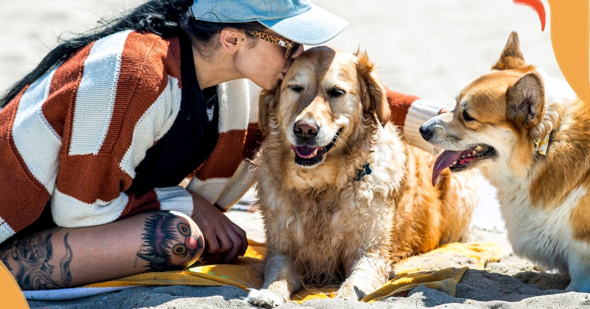 Love traveling with your dog? Don't miss this pup-friendly San Diego adventure