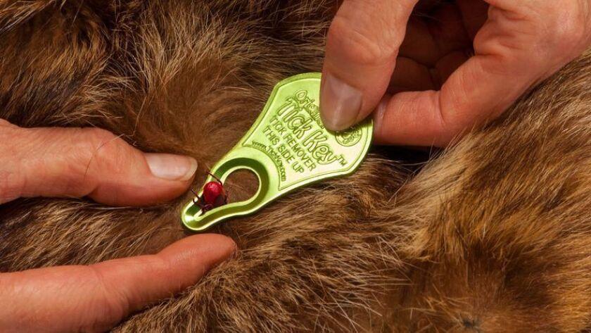 La mejor manera que hemos encontrado para – ¡eww! – quitarle las garrapatas a una mascota - Los Angeles Times