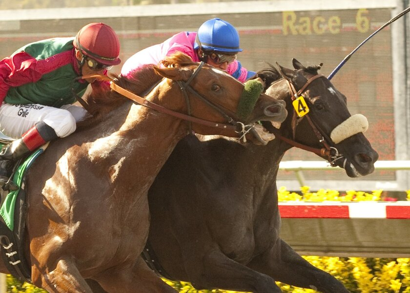 Woodman's Luck, a 4-year-old colt twice tried to bite Romeo Royale at the wire. Nearly bitten, but not beaten, Romeo Royale prevailed and paid $23 to win with Alex Bisono aboard Saturday at Del Mar.