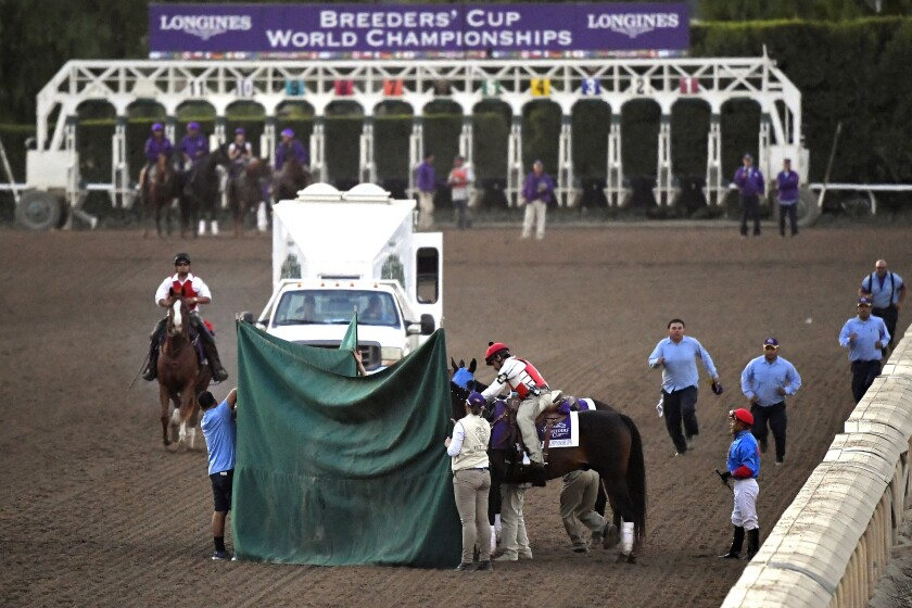 Track personnel treat Mongolian Groom after the Breeders' Cup Classic race at Santa Anita Park on Nov. 2, 2019.