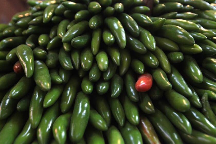 El sector agroalimentario se consolida como estratégico para México