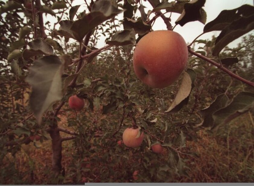 Climate change and apples