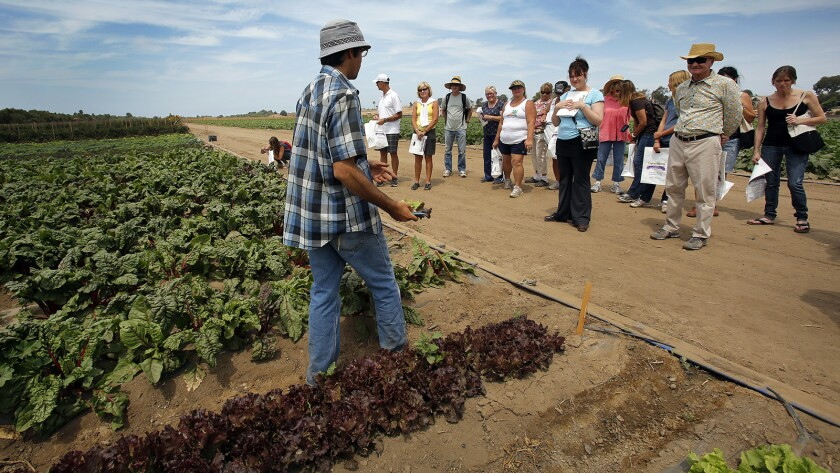 Farm tours were an important part of the mission at Suzie's Farm. Co-owner Lucila De Alejandro said she wanted San Diegans to see where their food came from.