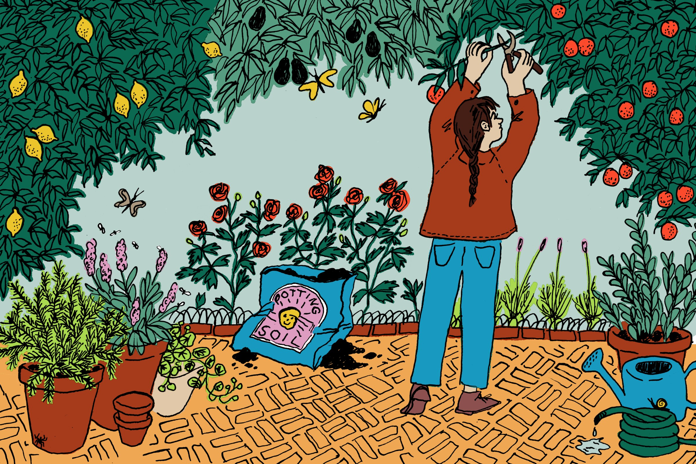 Common questions about outdoor plants, answered - Los Angeles Times