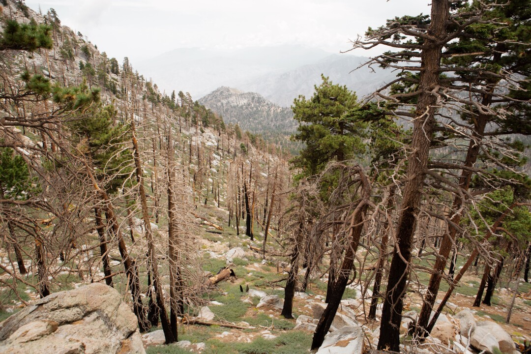 A view from The San Jacinto Mountains is seen.