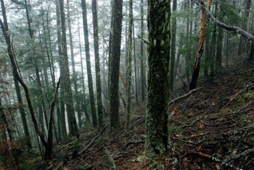 This March 18, 2011 file photo shows a forested hillside on U.S. Bureau of Land Management land outside Ruch, Ore. A federal judge ruled Thursday, March 31, 2011 that Interior Secretary Ken Salazar must asked for public comment before withdrawing a controversial Bush administration plan to double l