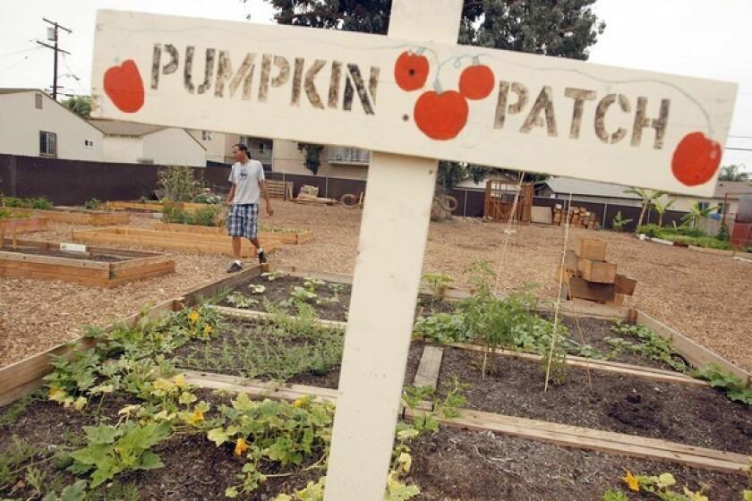 A Long Beach community garden
