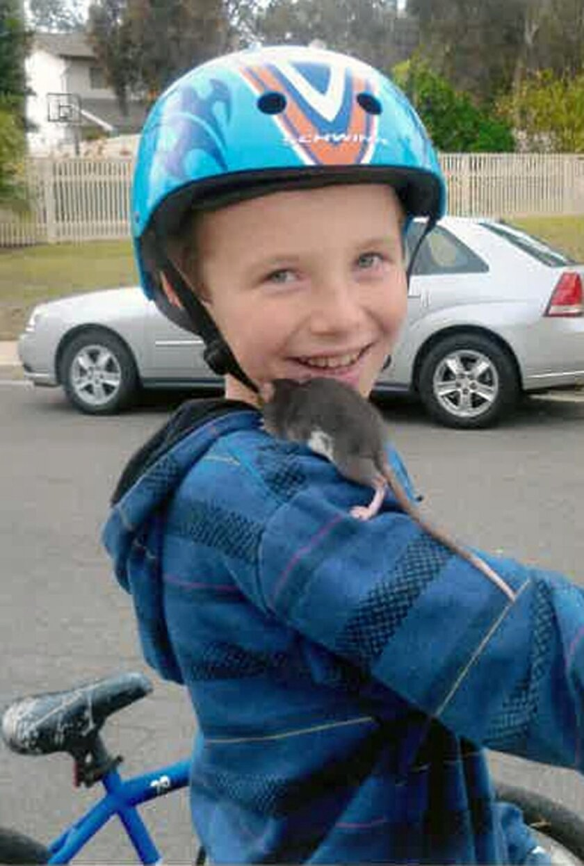 This undated photo released by Gomez Trial Attorneys courtesy the Pankey family, shows Aidan Pankey and one of his pet rats. Lawyers representing the Pankey family have filed a lawsuit against Petco Animal Supplies Inc., saying Aidan died from rat-bite fever contracted from a male rat purchased at