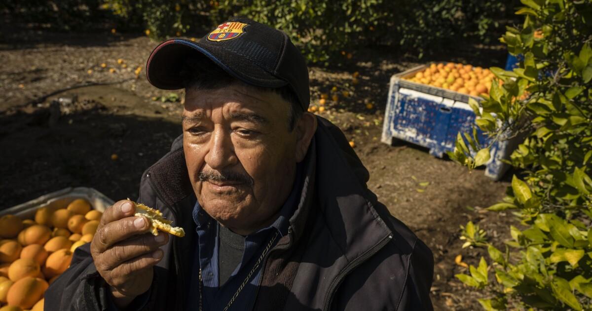 Farmworkers πρόσωπο coronavirus κινδύνου, τροφή