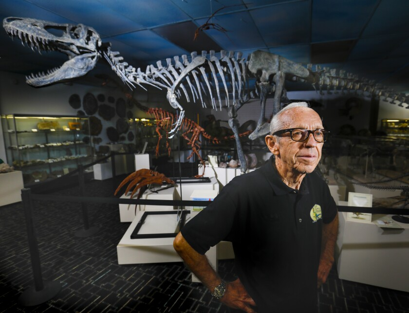 Keith Roynon, founder of Roynon Museum of Earth Sciences and Paleontology stands in the museum with a backdrop of a reproduction of a Tarbosaurus dinosaur.