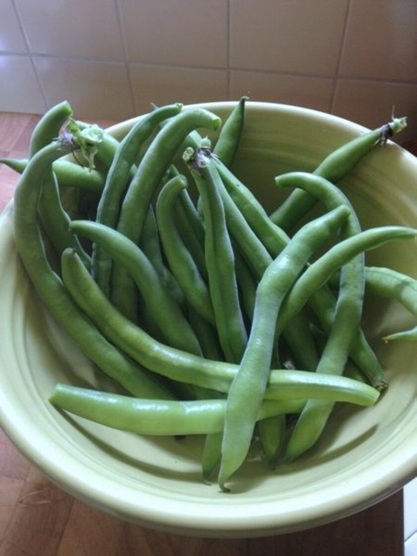 Fishing for fava recipes -- the hive mind comes through