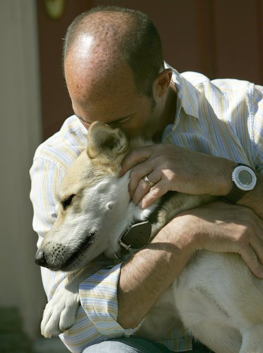 Jay Kopelman and his dog, Lava, play on the front porch of his home in April 2008. Kopelman brought Lava home from Fallujah, Iraq. (Earnie Grafton, San Diego Union-Tribune)