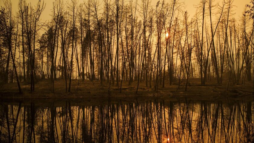 WHISKEYTOWN, CALIF. -- SATURDAY, JULY 28, 2018: The sun sets through trees that were burned by the w