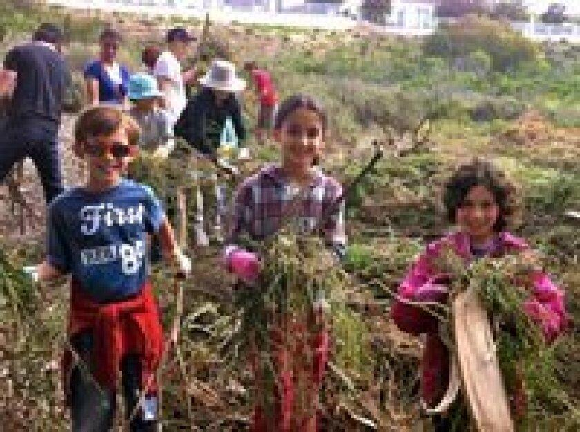 Sebastian Dos Santos, Raquel Dos Santos and Sasha Moscona Kruger clearing the Batiquitos Lagoon of invasive plants.