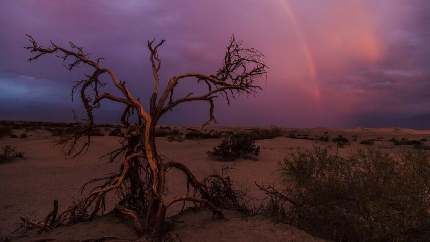 DEATH VALLEY, CA., DECEMBER 12,2014: A rainbow forms during a rare stormy sunrise at the Mesquite Fl