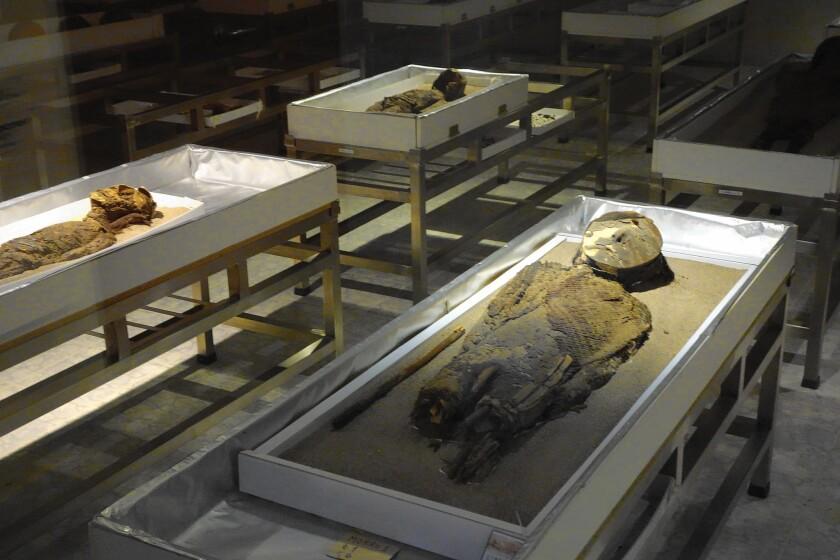 Chinchorro mummies in Chile