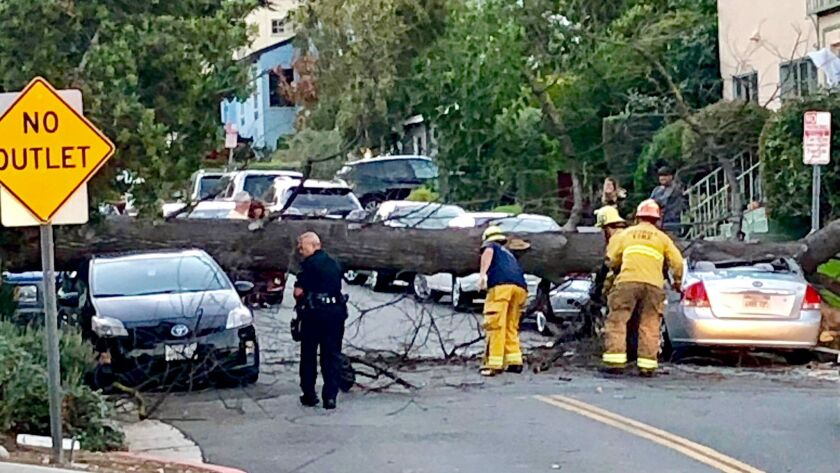 Emergency personnel look over a downed tree on Crestmont Ct. at N. Verdugo Rd. across the street fr