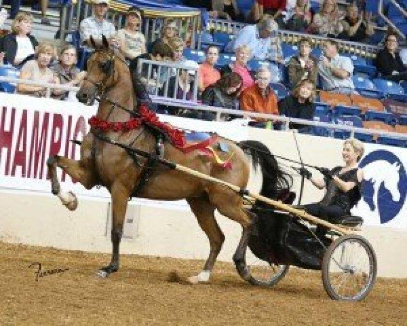 Beth Jupp at last year's US National Arabian and Half-Arabian Championship Horse Show.