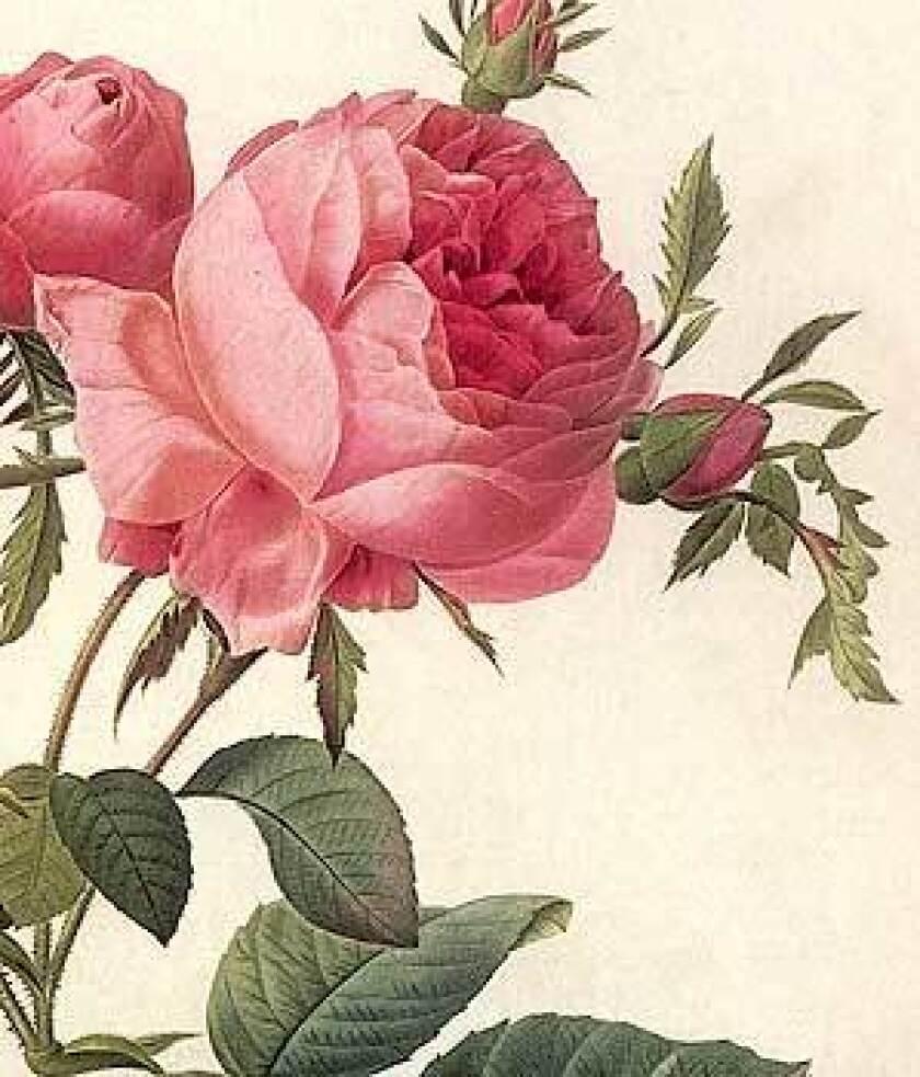 Rethinking the rose
