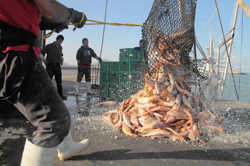 Iced fish from a trawler is dropped on a pier in San Felipe, Baja California. Researchers have seen steady, significant drops in a wide range of contaminants in fish.