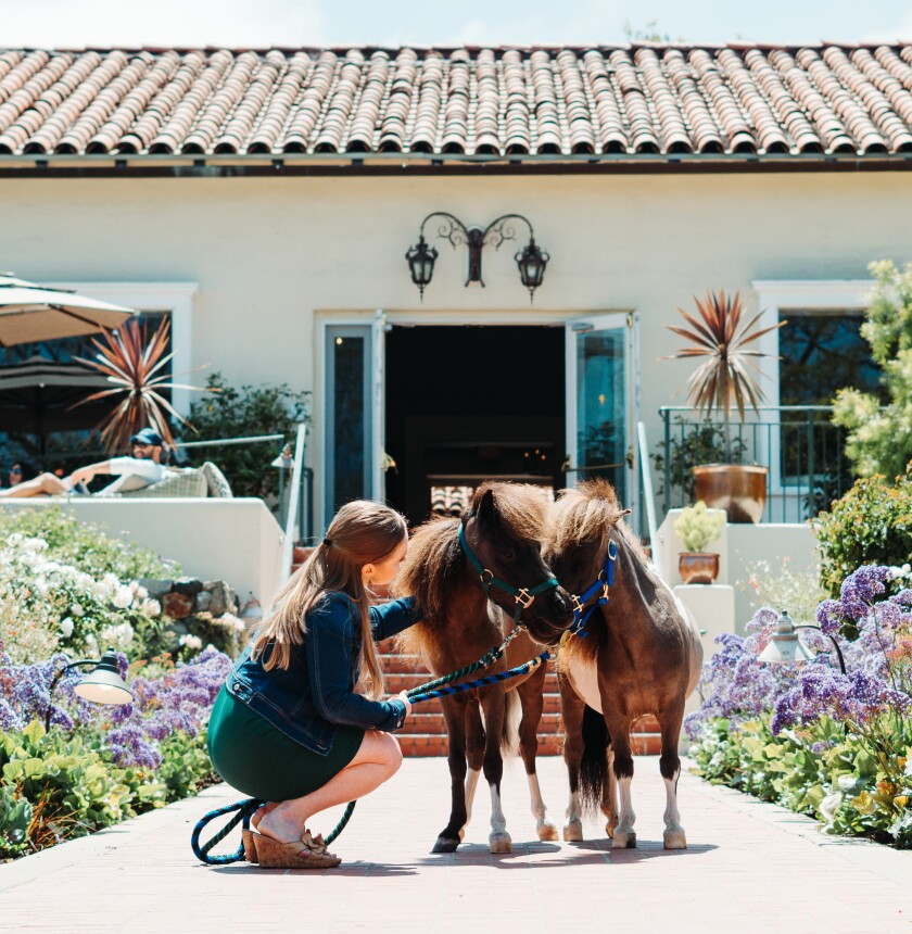 Ponies will welcome guests to the Inn at Rancho Santa Fe throughout the month of June.