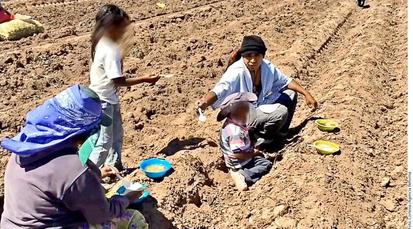 Un video sobre el operativo de dos días en un campo agrícola de la empresa Corporativo El Cerezo exhibe las condiciones de hacinamiento y falta de higiene en las que se encontraban los jornaleros.
