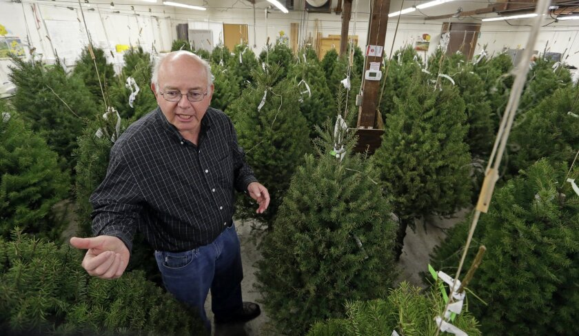 In this photo taken Tuesday, Dec. 23, 2014, Gary Chastagner, a Washington State University plant pathology professor, stands among trimmed Douglas fir trees suspended in a temperature and humidity-controlled room at a school research facility in Puyallup, Wash.  Consumers consistently cite messines