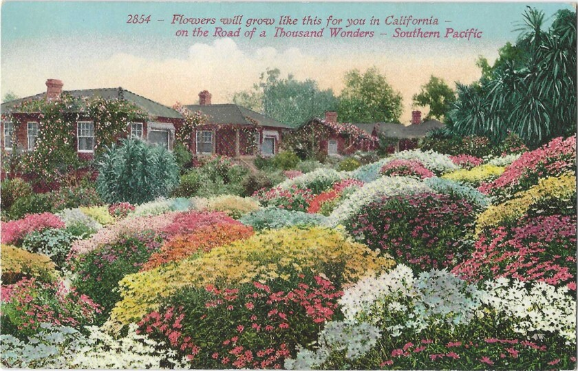 Vintage postcard depicts a garden in bloom