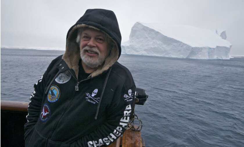 Captain Paul Watson of the Sea Shepherd Conservation Society, seen on a recent anti-whaling campaign in the Southern Ocean. Watson has been detained in Germany pending extradition to Costa Rica on charges from a 2002 incident involving a Costa Rican fishing vessel.