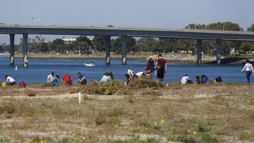 Volunteers help the California Least Tern