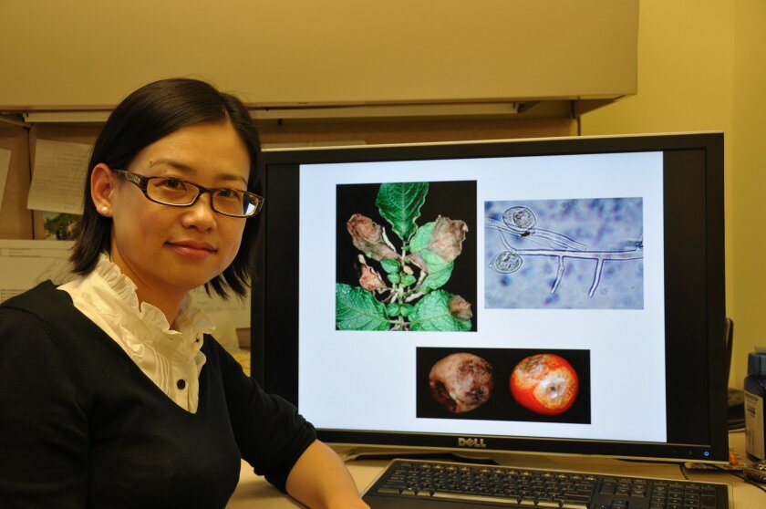 Wenbo Ma is an associate professor of plant pathology and microbiology at UC Riverside.