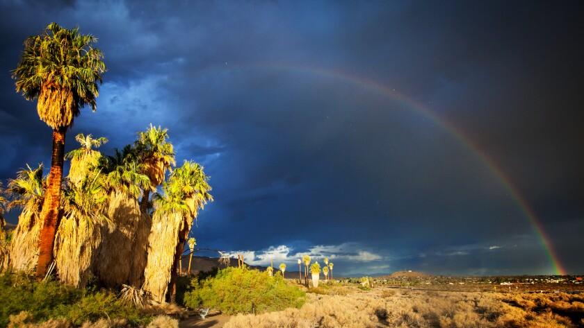 """Oasis of Mara es uno de los cinco oasis de palmeras del desierto en el Parque Doméstico Joshua Tree. """"pancho ="""" 840 """"valor ="""" 473 """"/>   <div class="""