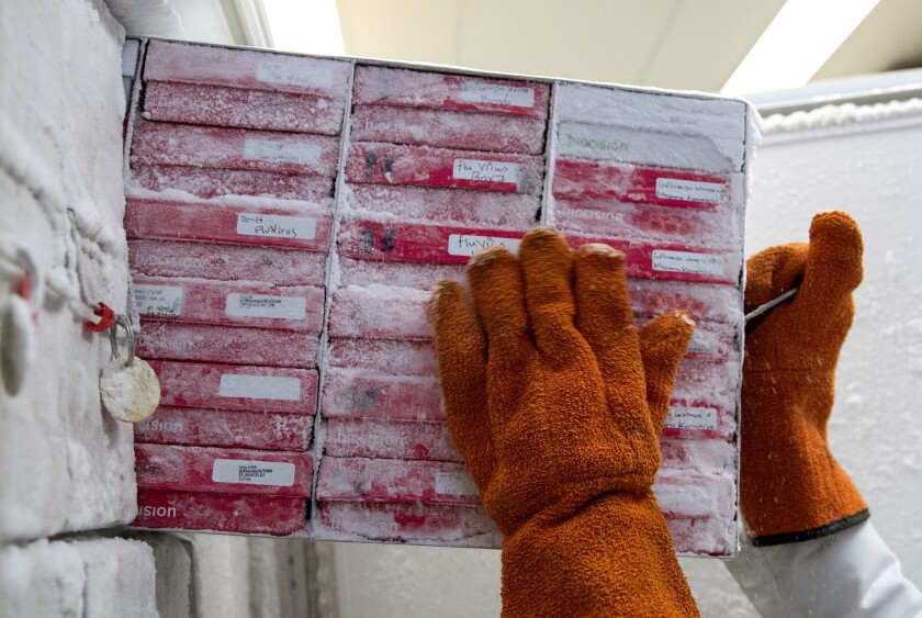 La bióloga Rebecca Gillespie saca cajas de cepas de virus de influenza
