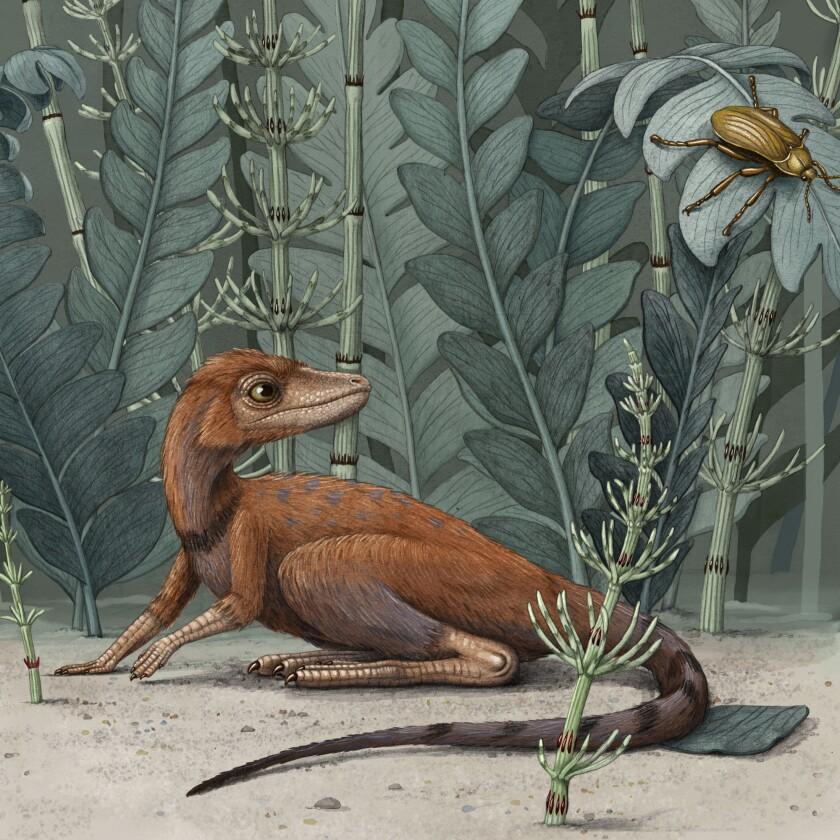 Esta ilustración de Alex Boersma, representa a un Kongonaphon kely, un pequeño pariente de los dinosaurios y pterosaurios