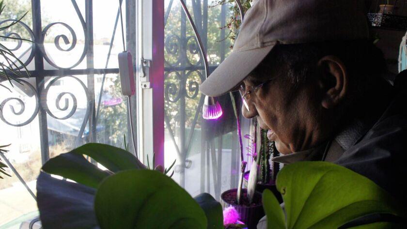 USDA ground surveyor Ramkarran Singh peers out an artist's back window in the Bedford-Stuyvesant sec